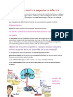 Neurona Motora Superior e Inferior