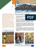 plantação de arvores