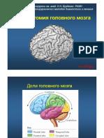 MRT_anatomia_golovnogo_mozga