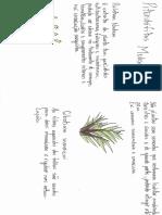 Pteridofitas medicinais
