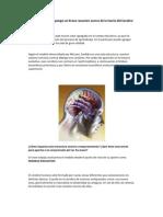 Modelo del cerebro triuno