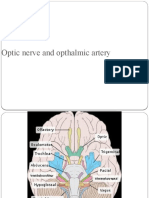 Optic nerve and opthalmic artery