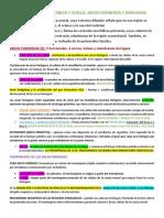 DESARROLLO DE LA CABEZA Y CUELLO - ARCOS FARINGEOS Y DERIVADOS