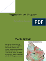 Vegetación_del_Uruguay2