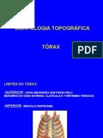 Anatomia Humana - Torax