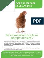 brochure-vie-poule-pondeuse
