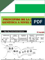 Semana 12_Principios de la mejora genética a nivel celular (1)