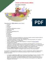 fich_revis_ultrastructure-cellule