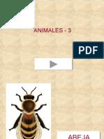 Animales 3