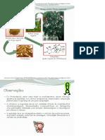 Conceitos Básicos Em Fitoterapia _ 2Passei Direto