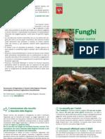 Funghi, nuove norme per la raccolta in Toscana