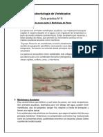 Morfologia de Peces