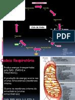 4. Metabolismo Carboidratos-parte III-respiração Celular