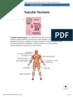 Sistema Muscular Humano - Partes, Nombres, Funciones + Imágenes _ Informacionde.info