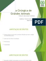 Clínica Cirúrgica de Grandes Animais Apresentaçao Quase Pronta