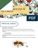 Entomología Clase III