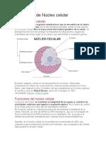 Núcleo celular