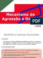 AULA 2bactérias (1)