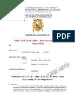 practica #07 phylum annelida