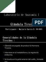 Gládula Tiroides