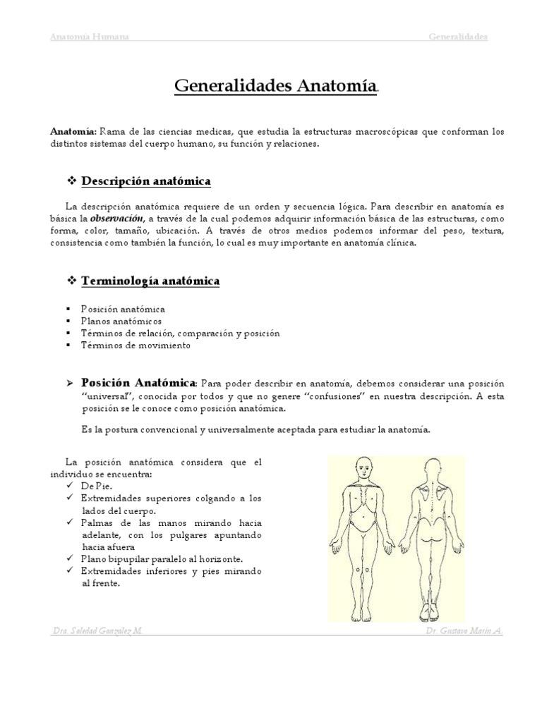 Atractivo Qué Estudias En La Anatomía Adorno - Imágenes de Anatomía ...