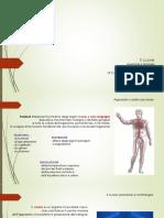 13^ Lezione - Anatomia e fisiologia del  cuore