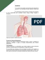 Atividade3 Texto Sistema Respiratório