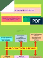 CICATRIZACION PPT 13