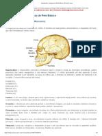 Estudando_ Limpeza de Pele Básico _ 4ª lição ossos