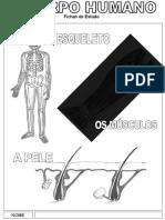 O Corpo Humano (fichas de estudo)