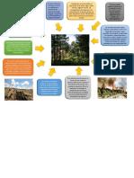 infograma del ciclo del carbono