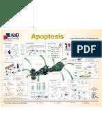 apoptosis-poster
