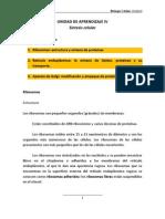 biologia_celular_unidad_4 (1)