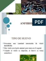 segmentacion anfibios