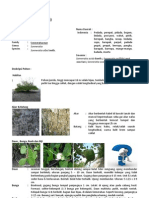 kea_sonneratia_alba.pdf