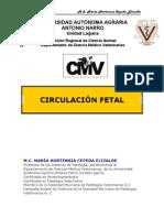 CIRCULACION_FETAL(2)