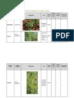 Anexos - Listado de Especies - Propuesta para la Rearborización del Parque de La Sabana