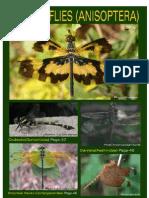 odonates-dragonflies