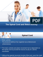 The Spinal Cord and Motor Activity
