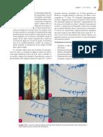 Micologia Medica Basica Alexandro Bonifaz_booksmedicos.org
