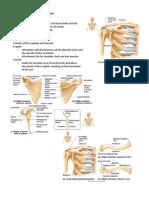 Handouts_Upper_Limbs_Bones_Sp11