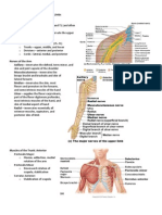 Handouts_Upper_Limbs_Muscles_Nerves_Sp11