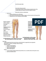 Nerves_Joints_of_the_lower_limbs_handouts