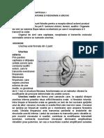 Notiuni  de Anatomie si Fizionomie a Urechii