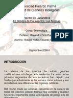 Informe 2. La Cabeza de Los Insectos