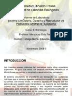 """INFORME  8. Sistema Circulatorio, Digestivo y Reproductor de Periplaneta americana""""cucaracha"""""""