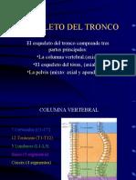 esqueleto-del-troncocolumna-vertebral-1213381212733793-8