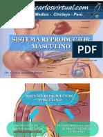 sistema-reproductor-masculino-122