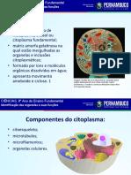 Identificação das organelas e suas funções