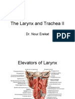 The_Larynx_and_Trachea_II